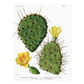 Desert Cactus Plant Pattern Vintage Postcard