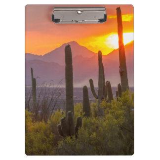 Desert cactus sunset, Arizona Clipboard