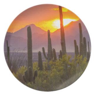 Desert cactus sunset, Arizona Plate