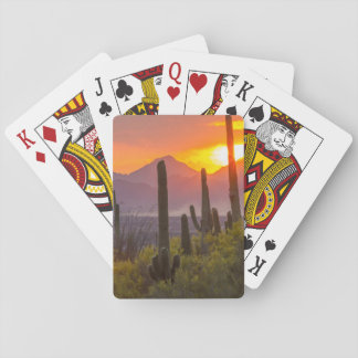 Desert cactus sunset, Arizona Playing Cards