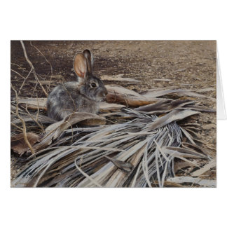 Desert Cottontail Blank Card By Andrew Denman
