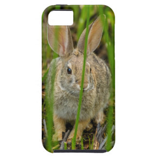 Desert Cottontail Rabbit Case For The iPhone 5