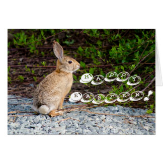 Desert Cottontail Rabbit Greeting Card