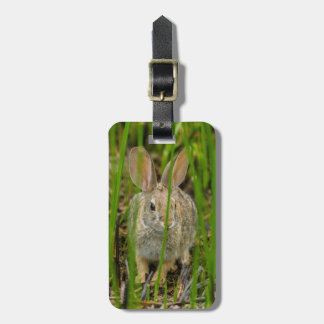 Desert Cottontail Rabbit Luggage Tag