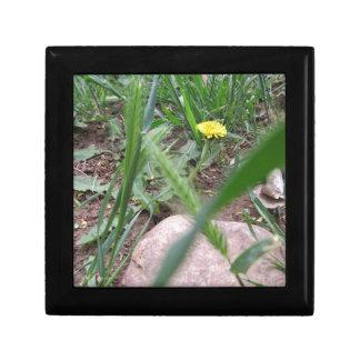 Desert Dandelion 2 Small Square Gift Box