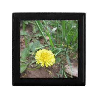 Desert Dandelion 4 Small Square Gift Box