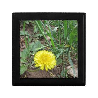 Desert Dandelion 5 Small Square Gift Box