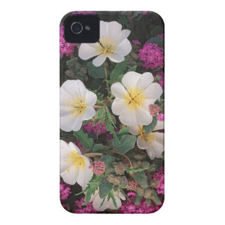Desert Evening Primrose and Desert Sand Verbena, iPhone 4 Cases