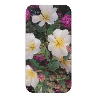 Desert Evening Primrose and Desert Sand Verbena, iPhone 4 Covers