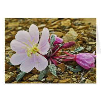 Desert Evening Primrose Notecard