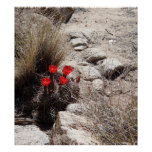 Desert Flowers, Joshua Tree National Park Poster