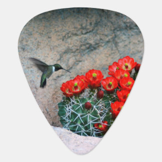 Desert Hummingbird Guitar Pick