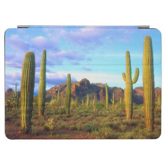 Desert in springtime iPad air cover