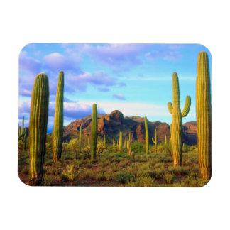 Desert in springtime rectangular photo magnet