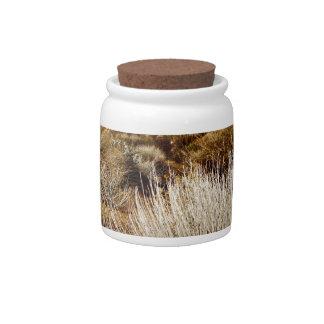 DESERT LANDSCAPE IN EARLY SPRING CANDY JAR