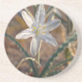 Desert Lily Wildflowers Coasters