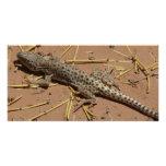 desert lizard photo card