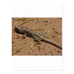 desert lizard post card