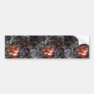Desert Mallow Bumper Sticker