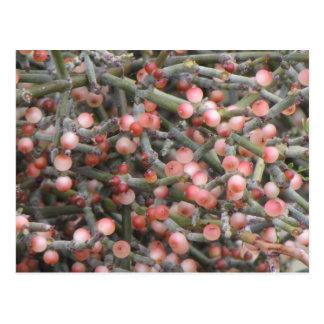 Desert Mistletoe Berries Postcard