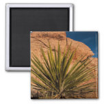 Desert Plant Life Magnets