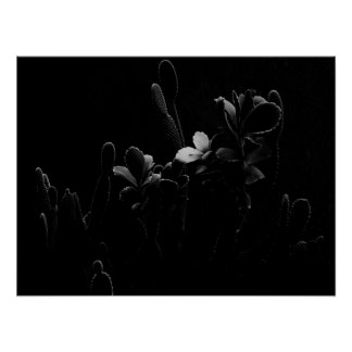 Desert Plants in Black and White Poster