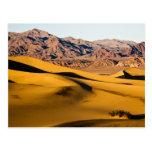 Desert Playground Postcards
