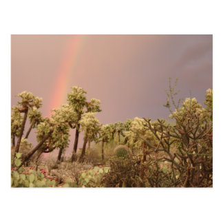 Desert Rainbow Postcard