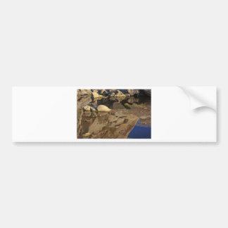 Desert Reflections 5 Bumper Sticker
