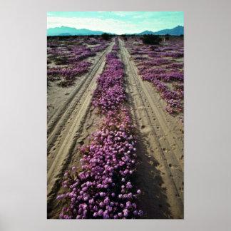 Desert Roadway flowers Print