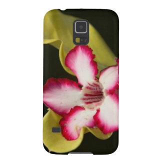 Desert-Rose (Adenium Obesum), South Africa Galaxy S5 Cases
