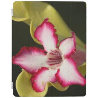 Desert-Rose (Adenium Obesum), South Africa iPad Cover