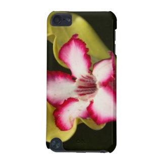 Desert-Rose (Adenium Obesum), South Africa iPod Touch 5G Cases