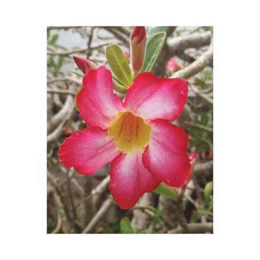 Desert Rose Stretched Canvas Print