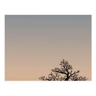 Desert Shrub Silhouettes Postcard
