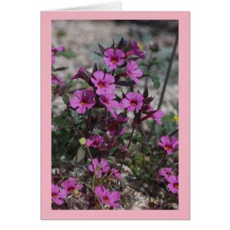 Desert Spring Wildflower Bigelow's Monkey Flower Card