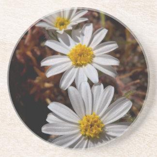 Desert Star Wildflowers Coaster
