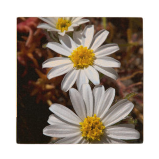 Desert Star Wildflowers Wood Coaster
