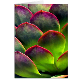 Desert Succulent in Bright Sun and Shade Card