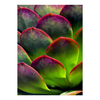 Desert Succulent in Bright Sun and Shade Poster