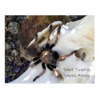 Desert Tarantula Postcard