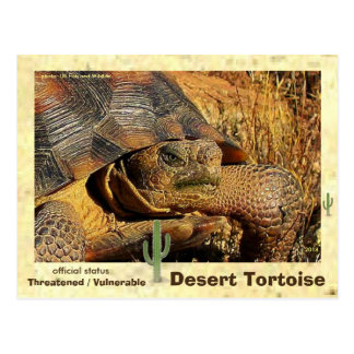 Desert Tortoise is endangered Postcard