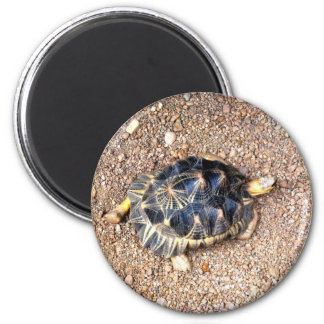 desert tortoise magnet
