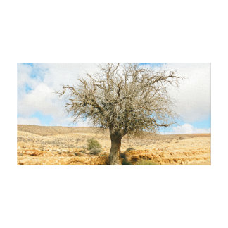 Desert tree surviving the heat stretched canvas prints