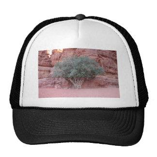 Desert Trees Mesh Hats