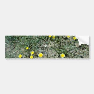 Desert Wildflowers flowers Bumper Stickers