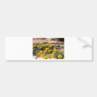 Desert Yellow Daisies Bumper Sticker