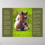 Desiderata Poem - Dartmoor Pony Foal Print