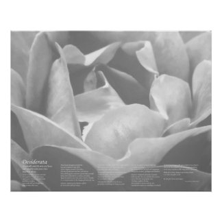 Desiderata - Satin Texture Rose in Black and White Poster