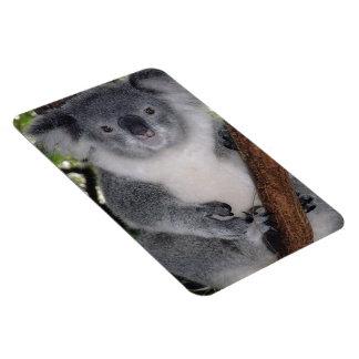 Destiny Zazzle Cute Koala Aussi Outback Vinyl Magnet